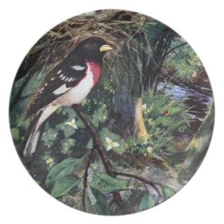 Rose-Breasted Grosbeak & His Nest of Eggs Dinner Plates