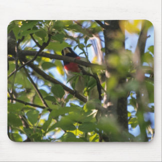 Rose-breasted Grosbeak Mouse Pad