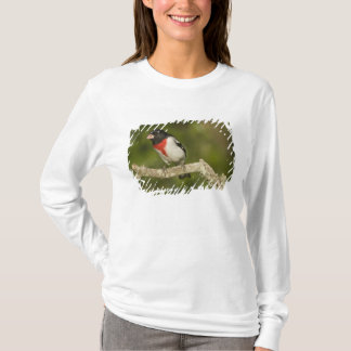 Rose-breasted grosbeak, Pheucticus 2 T-Shirt