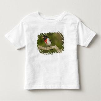 Rose-breasted grosbeak, Pheucticus 2 Toddler T-shirt