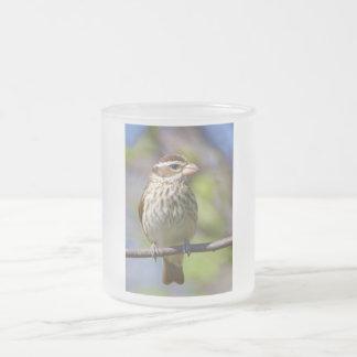 Rose Breasted Grosbeak Pheucticus Ludovicianus Frosted Glass Coffee Mug