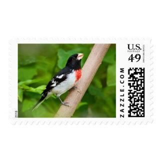 Rose-Breasted Grosbeak (Pheucticus Ludovicianus) Postage