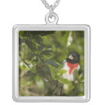 Rose-breasted grosbeak, Pheucticus Silver Plated Necklace