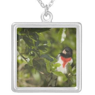 Rose-breasted grosbeak, Pheucticus Square Pendant Necklace