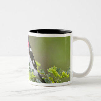 Rose-breasted Grosbeak Pheucticus Two-Tone Coffee Mug