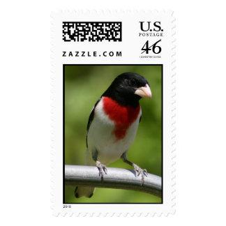 Rose-breasted grosbeak postage stamp