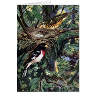 Rose-Breasted Grosbeaks and Their Nest of Eggs Card