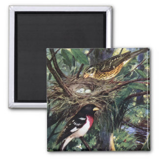 Rose-Breasted Grosbeaks and Their Nest of Eggs Magnet