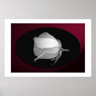 Rose Bud (Black & White) Poster