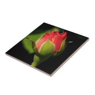 Rose Bud Ceramic Tile