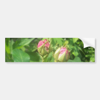 Rose Buds Bumper Sticker