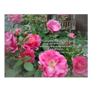 Rose Bush Happy Pink Roses Quote German Proverb Postcard