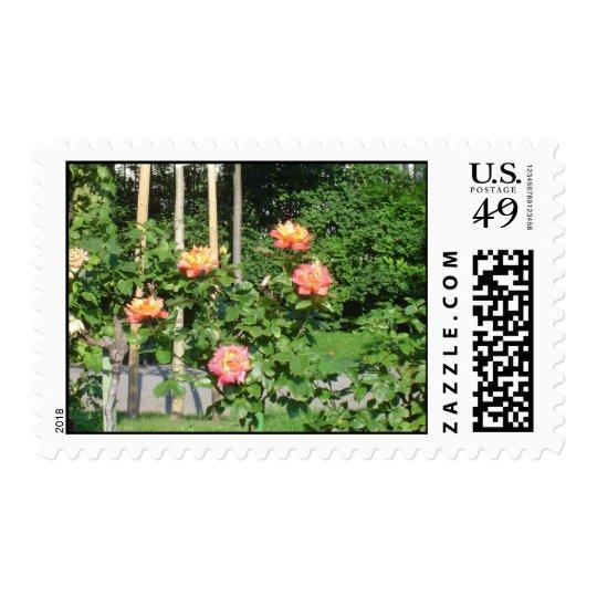 Rose bush postage