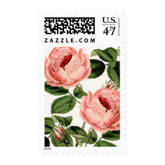 Rose Bush Postage Stamp