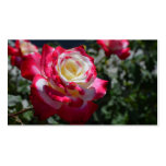 Rose Business Card