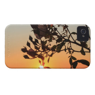 rose by sunrise iPhone 4 cover