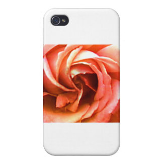 Rose Canterbury 3 The MUSEUM Zazzle Gifts iPhone 4/4S Covers