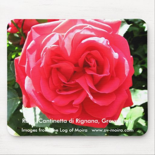 Rose, Cantinetta di Rignana, Greve, Italy Mouse Pads