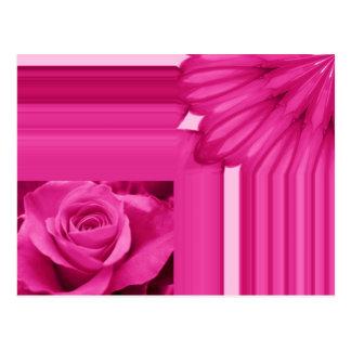 rose card pink