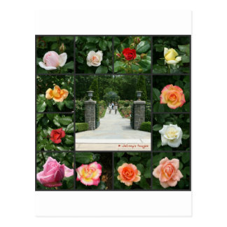 Rose collage postcard