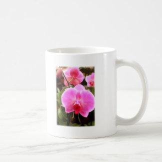 Rose Colored Phalaenopsis Orchid Classic White Coffee Mug