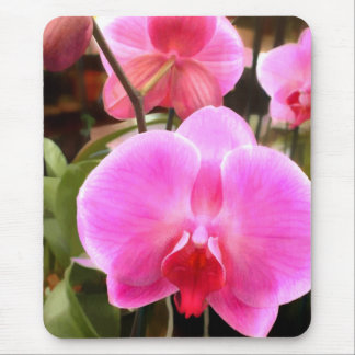 Rose Colored Phalaenopsis Orchid Mouse Pad