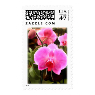 Rose Colored Phalaenopsis Orchid Postage