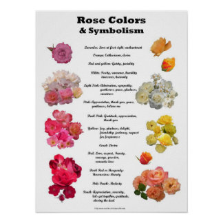 Rose Colors and Symbolism Poster
