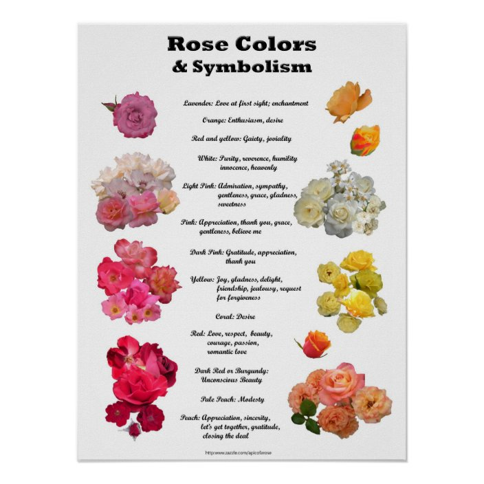 Rose Colors And Symbolism Poster Zazzle Com