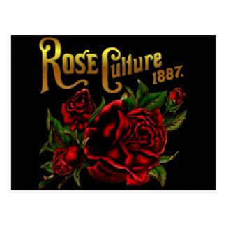 Rose Culture 1887 Postcard