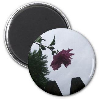 Rose dew fence gloomy fridge magnets