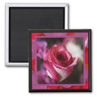 Rose Dreams Magnet