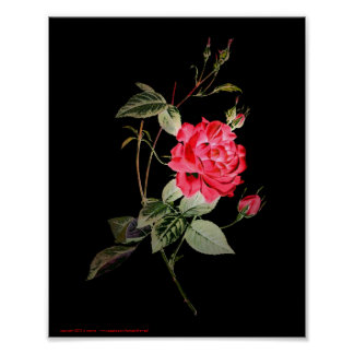 Rose Exotica 8x10 Poster