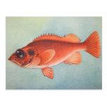 Rose Fish Postcard