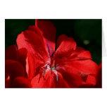 rose flower cards