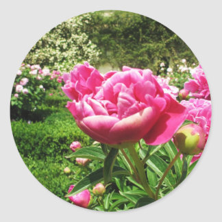 ROSE - flower close up Classic Round Sticker