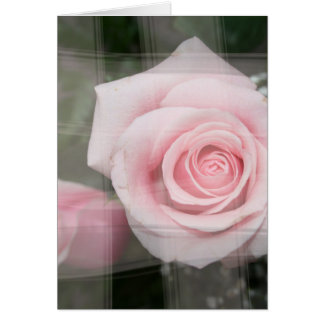 rose flower painted strokes pink roses greeting card
