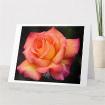 rose flowers flower blossoms petals card