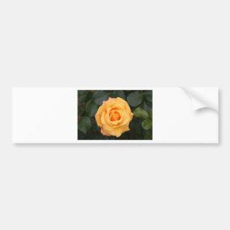 rose flowers flower  love wife sweetheart couple bumper sticker