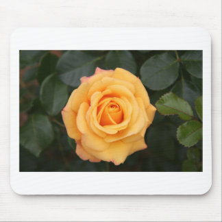 rose flowers flower  love wife sweetheart couple mouse pads