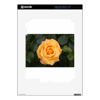 rose flowers flower  love wife sweetheart couple iPad 2 decals