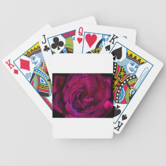rose flowers flower red water droplets date dance bicycle playing cards
