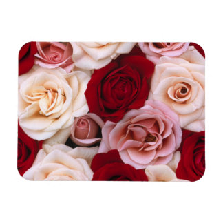 rose flowers sparkle glow shine happy magnet