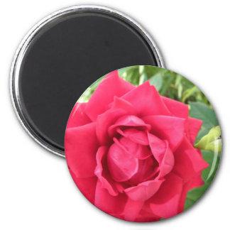 Rose Fridge Magnets