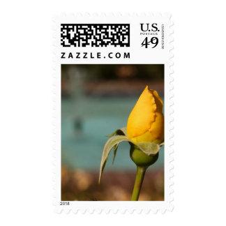 Rose Garden In Balboa Park Postage Stamps