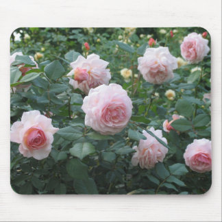 Rose Garden Mouse Pads