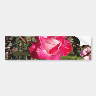 Rose Gaujard Bumper Sticker