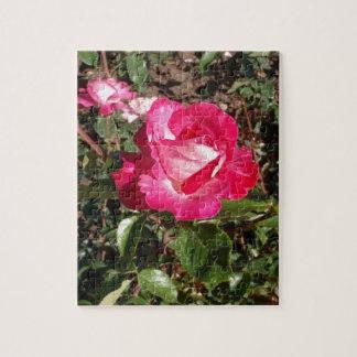 Rose Gaujard Puzzles