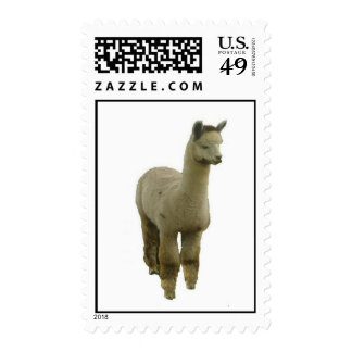 Rose grey alpaca postage stamps