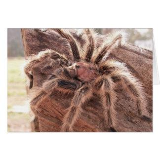 Rose Hair Tarantula Card